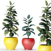 Colección de plantas modelo 3d