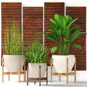 Coleção de plantas 3d model