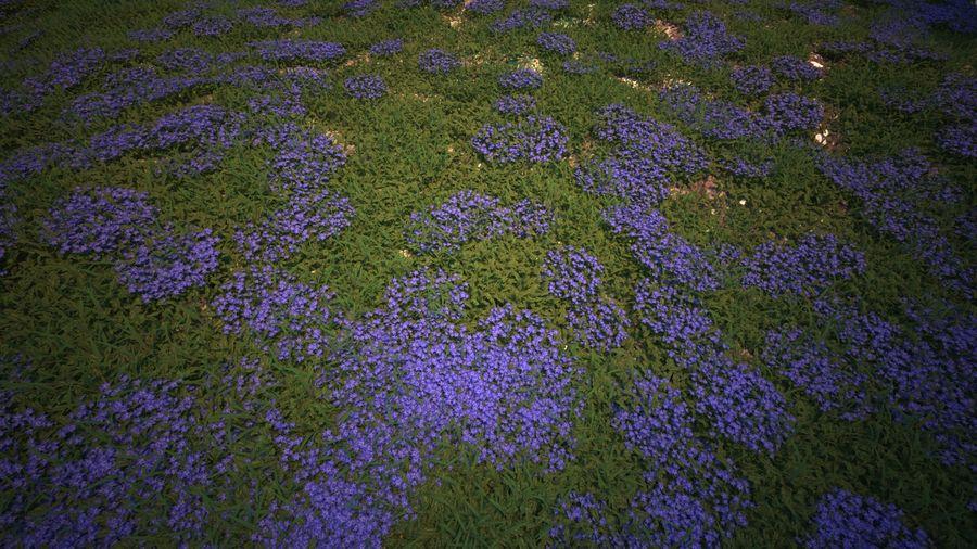環境のための草と花 royalty-free 3d model - Preview no. 7