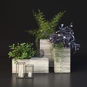 Decoração com plantas 3d model