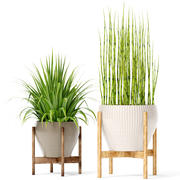 Kolekcja roślin (2) 3d model