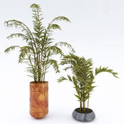 Rośliny w doniczkach 3d model