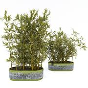 Rośliny w doniczkach 3 3d model