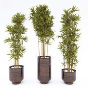 家庭用植物 3d model