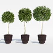 榕树 3d model