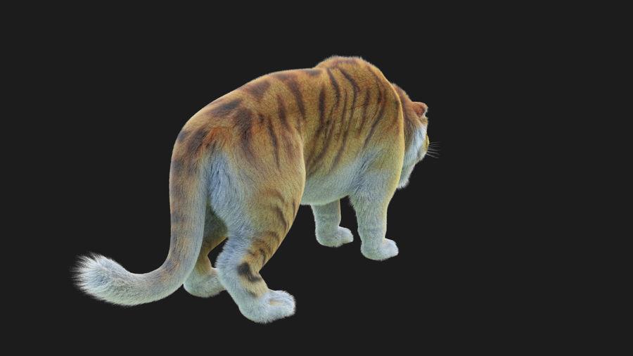 Pele de tigre royalty-free 3d model - Preview no. 4