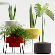 växter 89 3d model