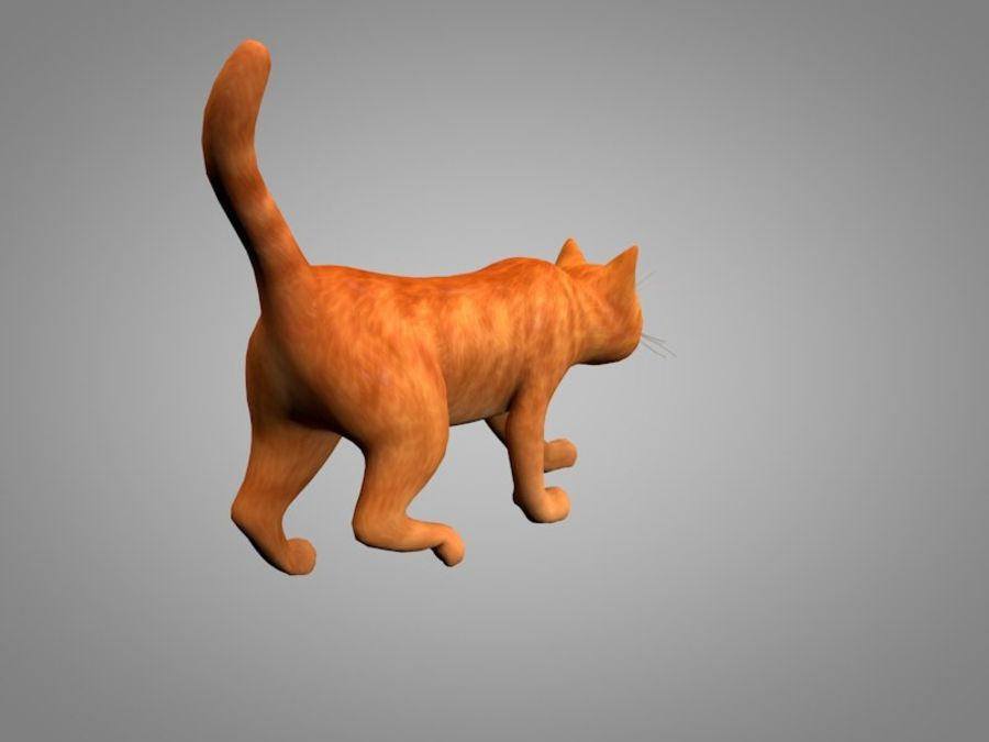 Katt eller katt royalty-free 3d model - Preview no. 8
