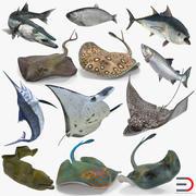 Collection de modèles 3D de poissons gréés 3d model