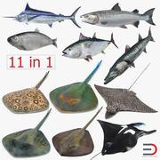 Collection de modèles 3D de poissons 3d model