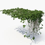 Ivy (10) 3d model