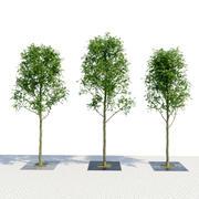 Set de grille de jardinière 3d model