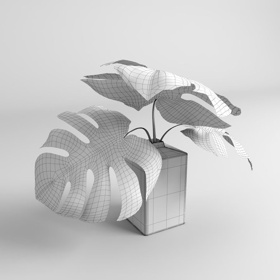 Monstera Plants (+GrowFX) royalty-free 3d model - Preview no. 17