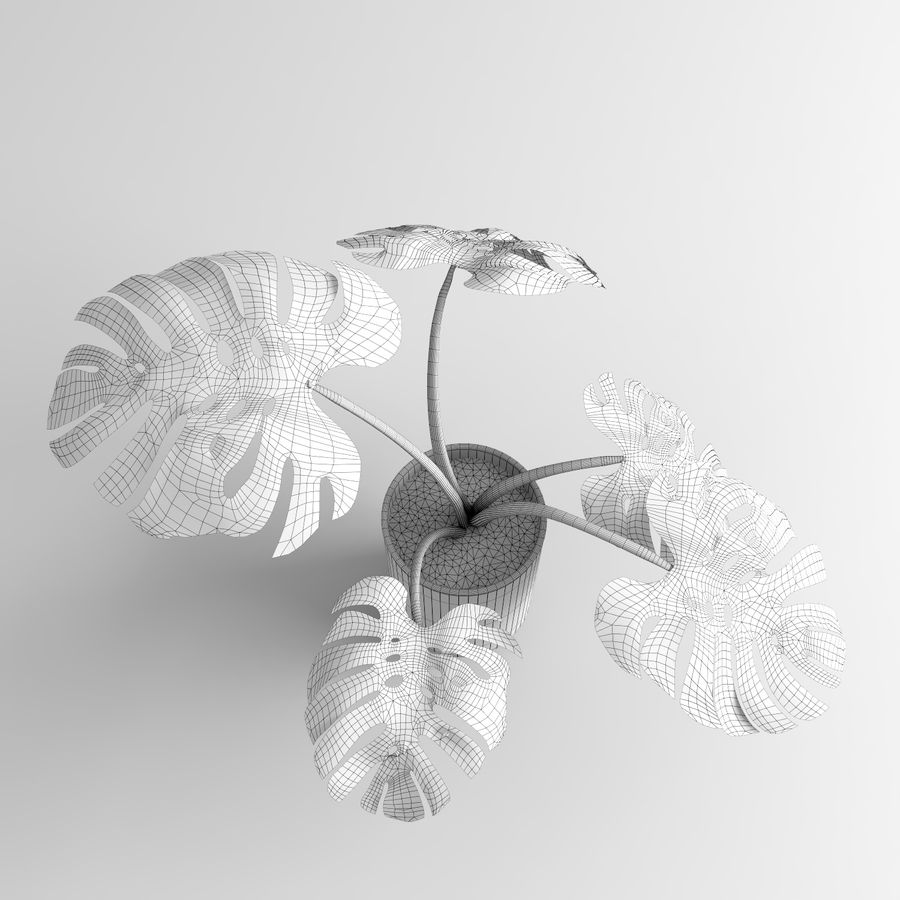 Plantes Monstera (+ GrowFX) royalty-free 3d model - Preview no. 15