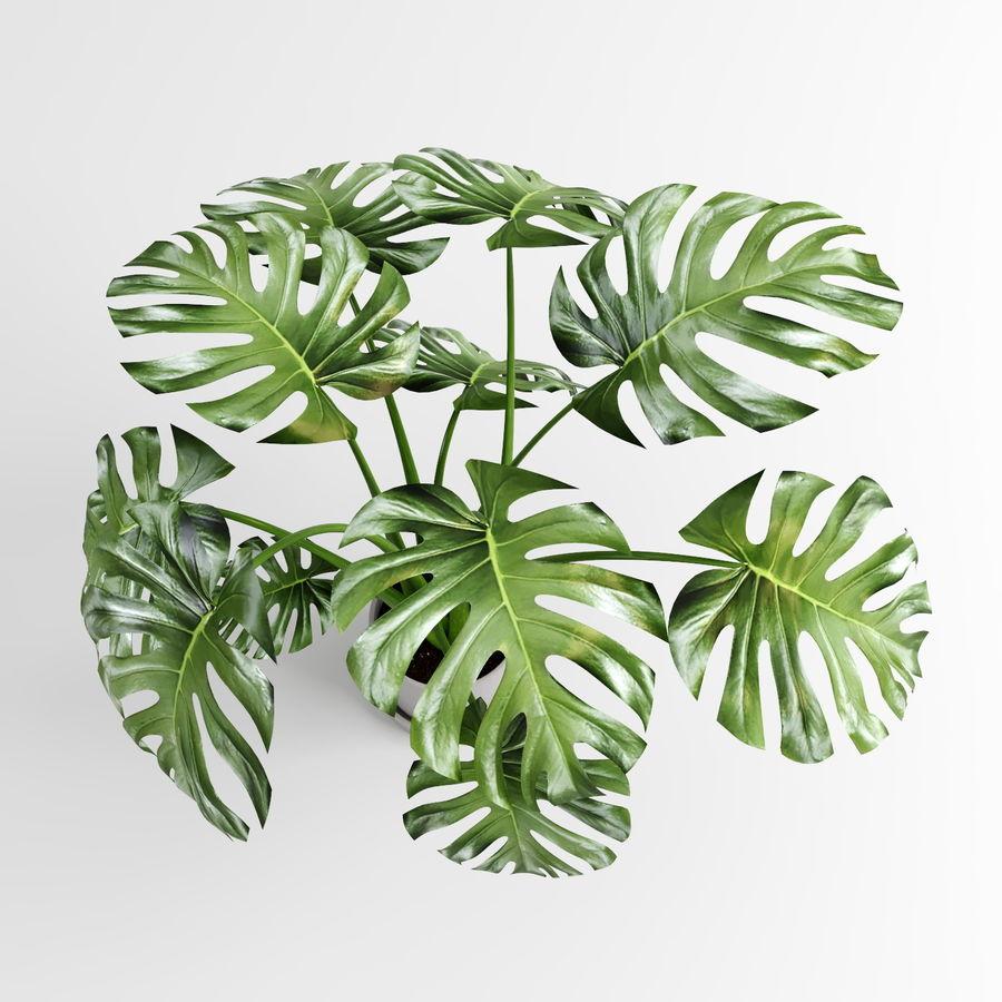 Растения Монстера (+ GrowFX) royalty-free 3d model - Preview no. 5