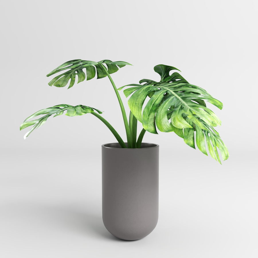 Monstera Plants (+GrowFX) royalty-free 3d model - Preview no. 6