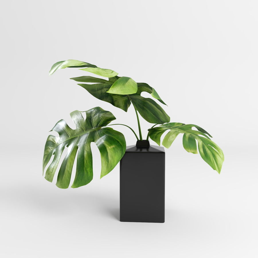 Plantes Monstera (+ GrowFX) royalty-free 3d model - Preview no. 10