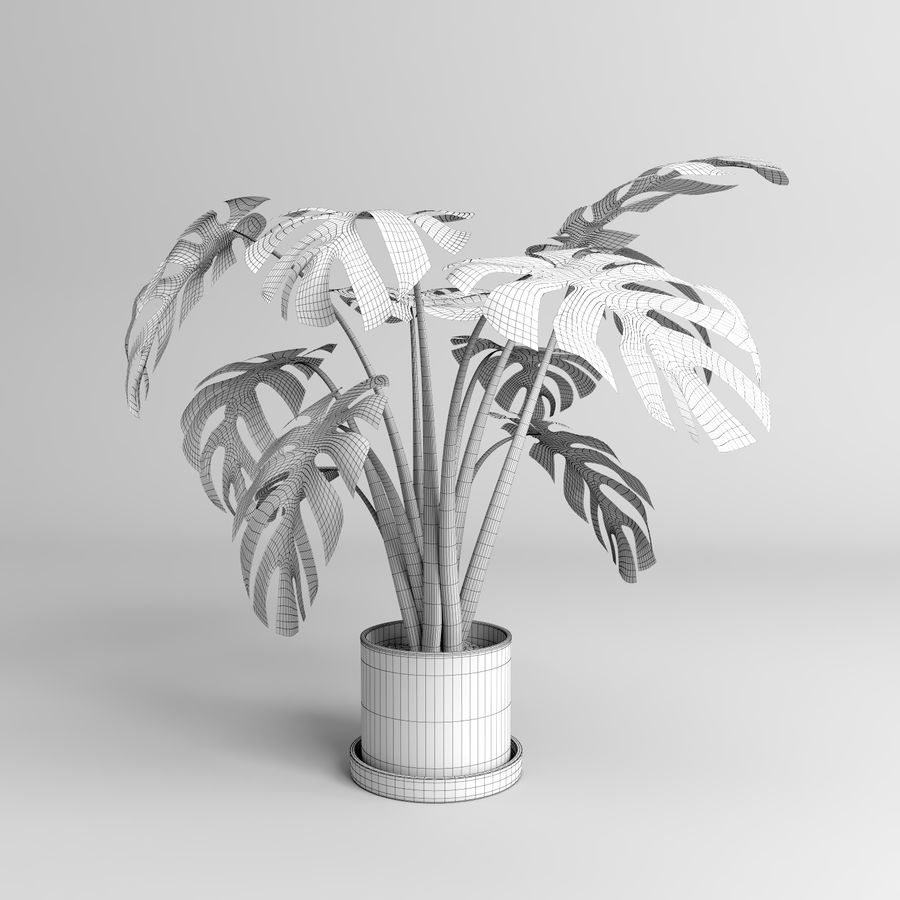 Plantes Monstera (+ GrowFX) royalty-free 3d model - Preview no. 12
