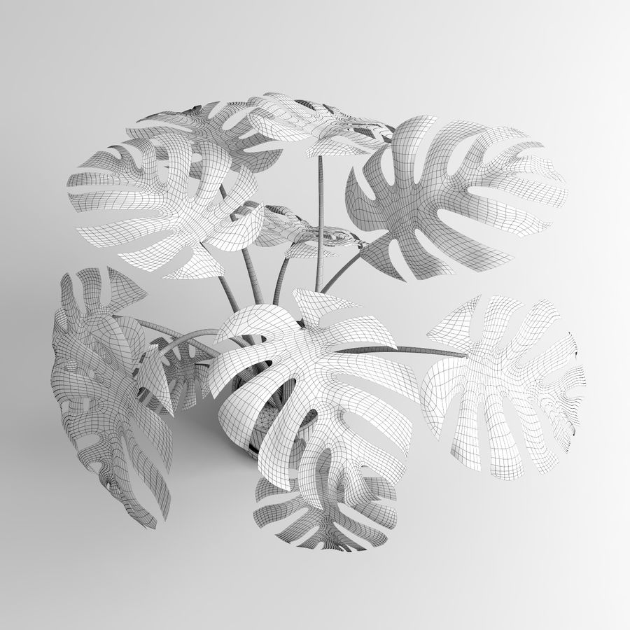 Plantes Monstera (+ GrowFX) royalty-free 3d model - Preview no. 13
