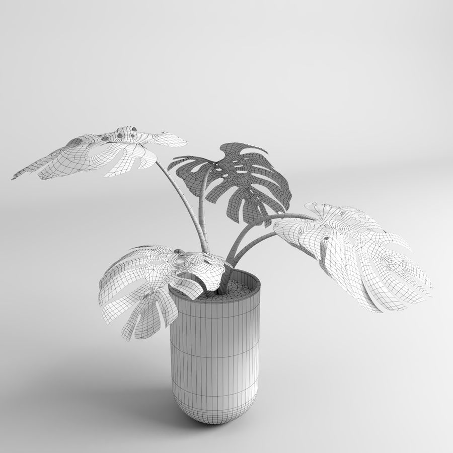 モンステラプラント(+ GrowFX) royalty-free 3d model - Preview no. 14