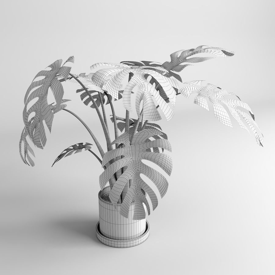 Plantes Monstera (+ GrowFX) royalty-free 3d model - Preview no. 11