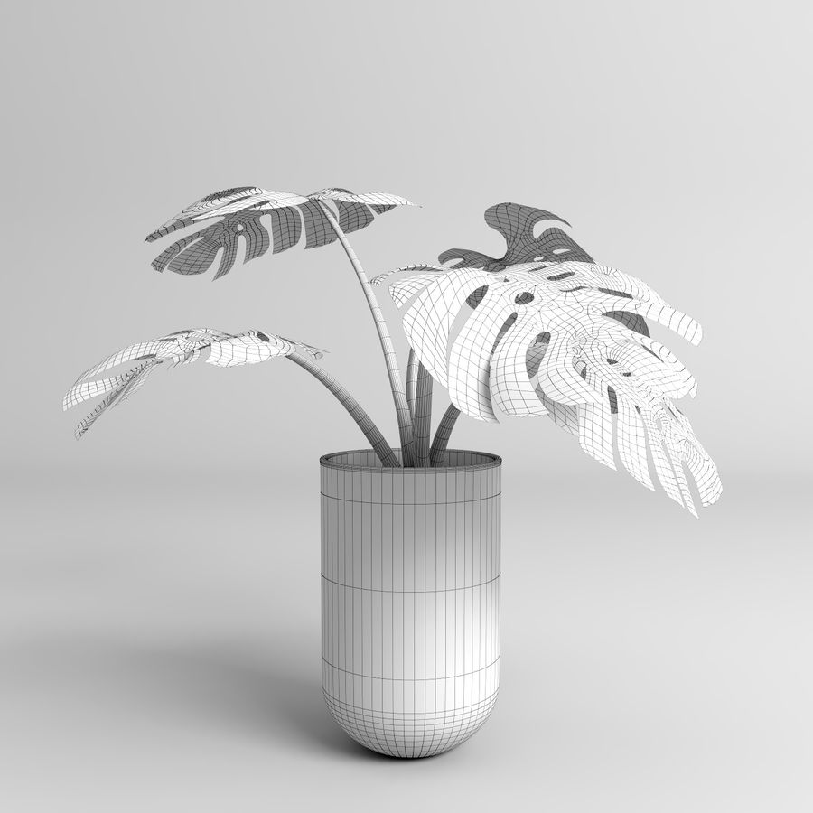 モンステラプラント(+ GrowFX) royalty-free 3d model - Preview no. 16