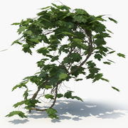 Lierre plante (01) 3d model