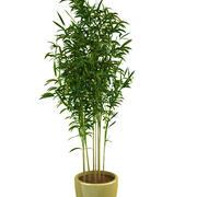 bamboe 1 3d model