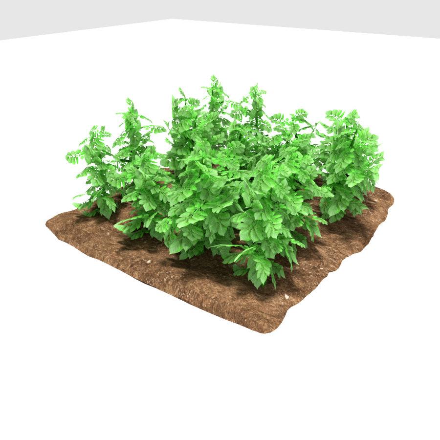 Pomme de terre 3 stades de croissance royalty-free 3d model - Preview no. 1
