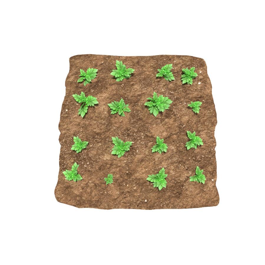 Pomme de terre 3 stades de croissance royalty-free 3d model - Preview no. 3