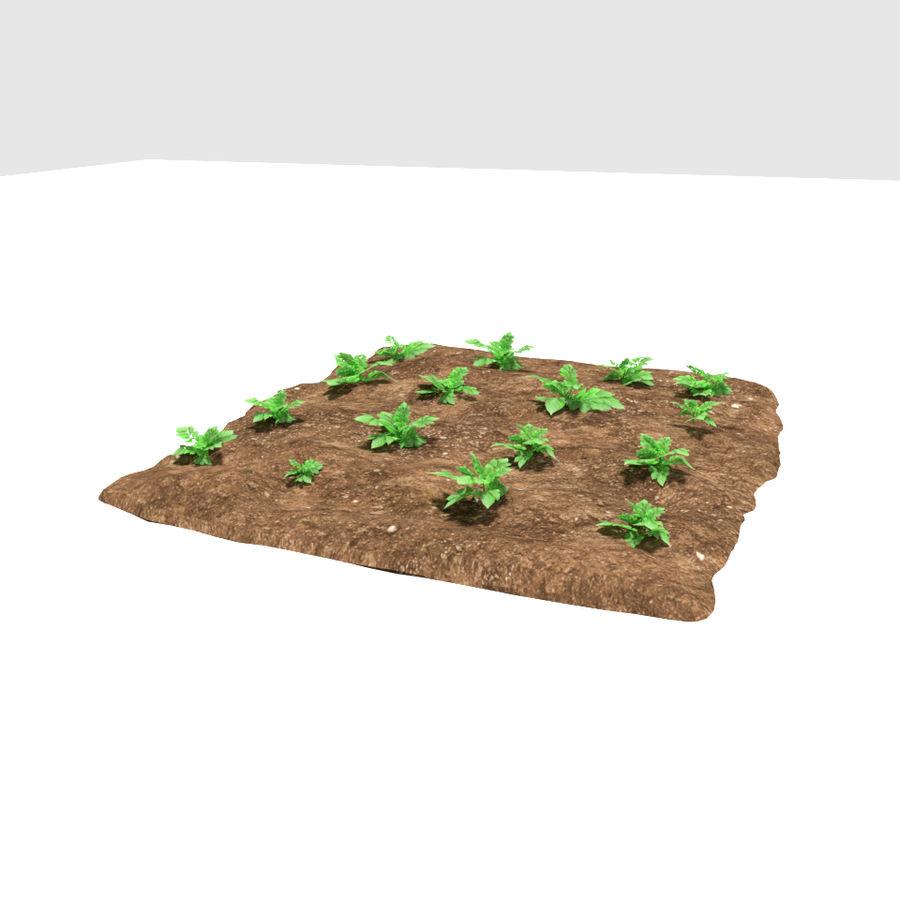 Pomme de terre 3 stades de croissance royalty-free 3d model - Preview no. 2