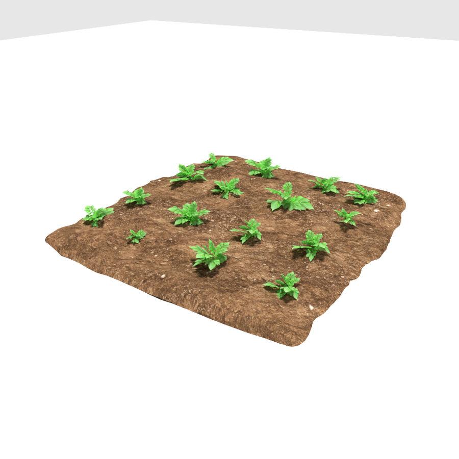 Pomme de terre 3 stades de croissance royalty-free 3d model - Preview no. 4