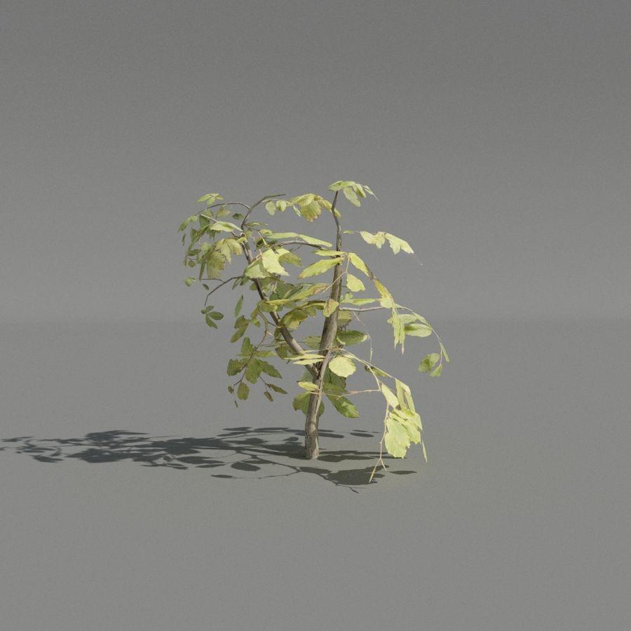 coleção de plantas de sebe royalty-free 3d model - Preview no. 2