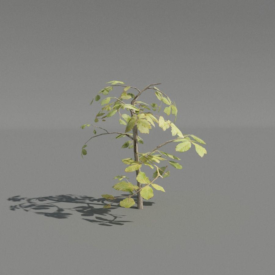 coleção de plantas de sebe royalty-free 3d model - Preview no. 3
