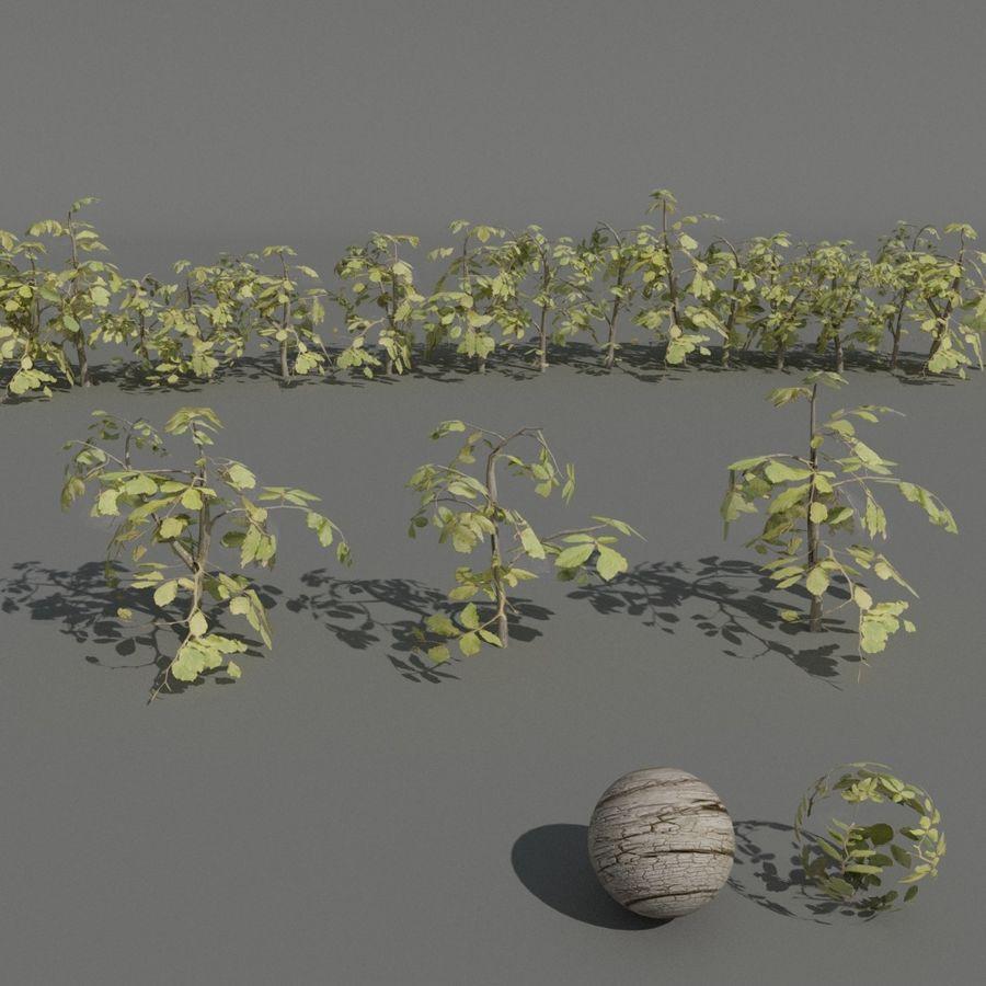 coleção de plantas de sebe royalty-free 3d model - Preview no. 1