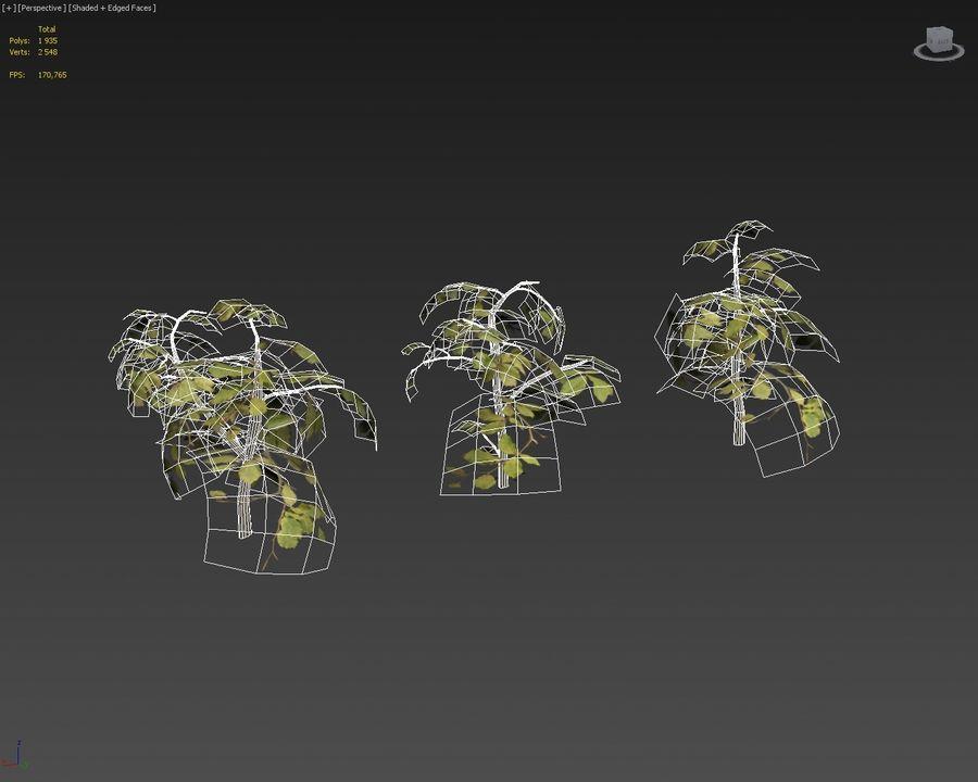 coleção de plantas de sebe royalty-free 3d model - Preview no. 6
