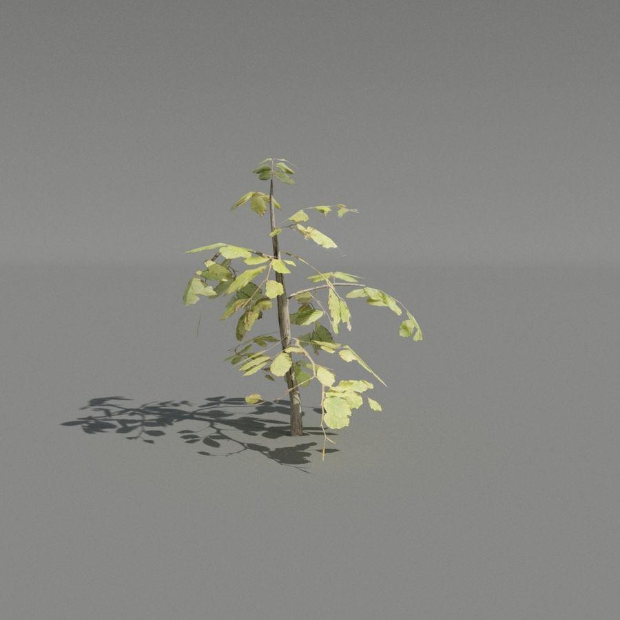 coleção de plantas de sebe royalty-free 3d model - Preview no. 4