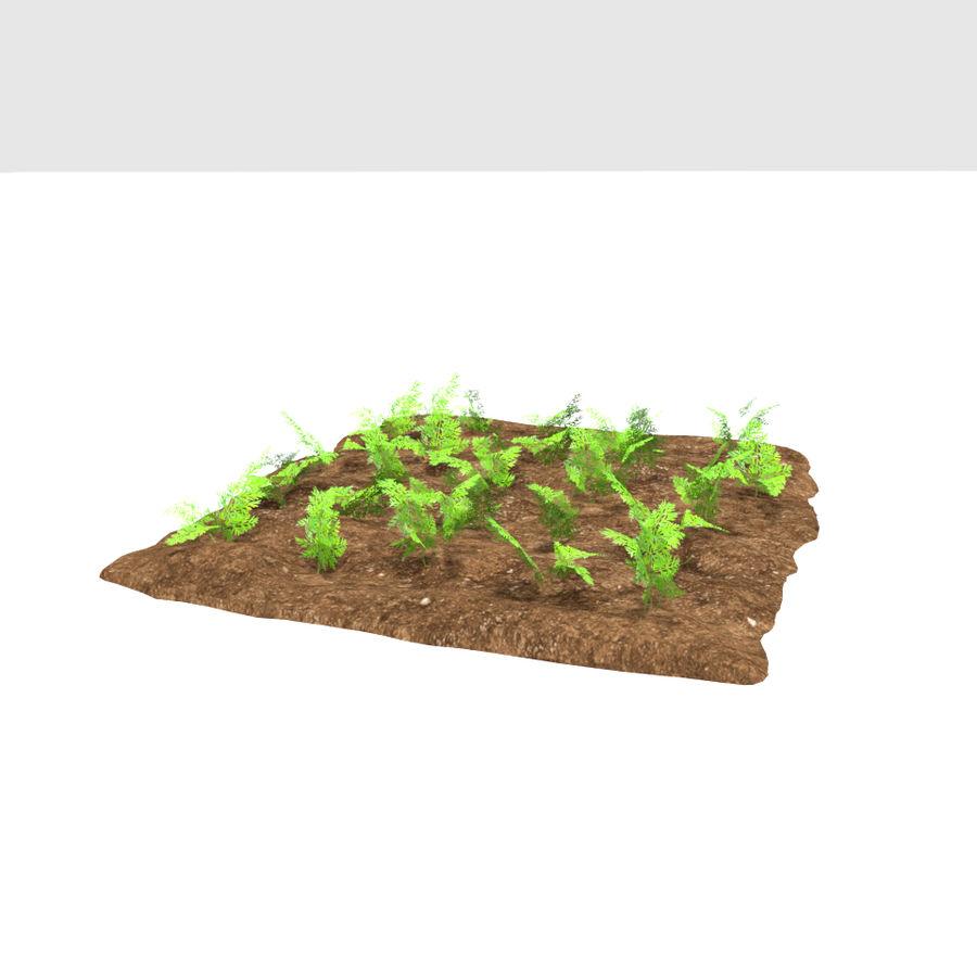 Carotte 3 stades de croissance royalty-free 3d model - Preview no. 4