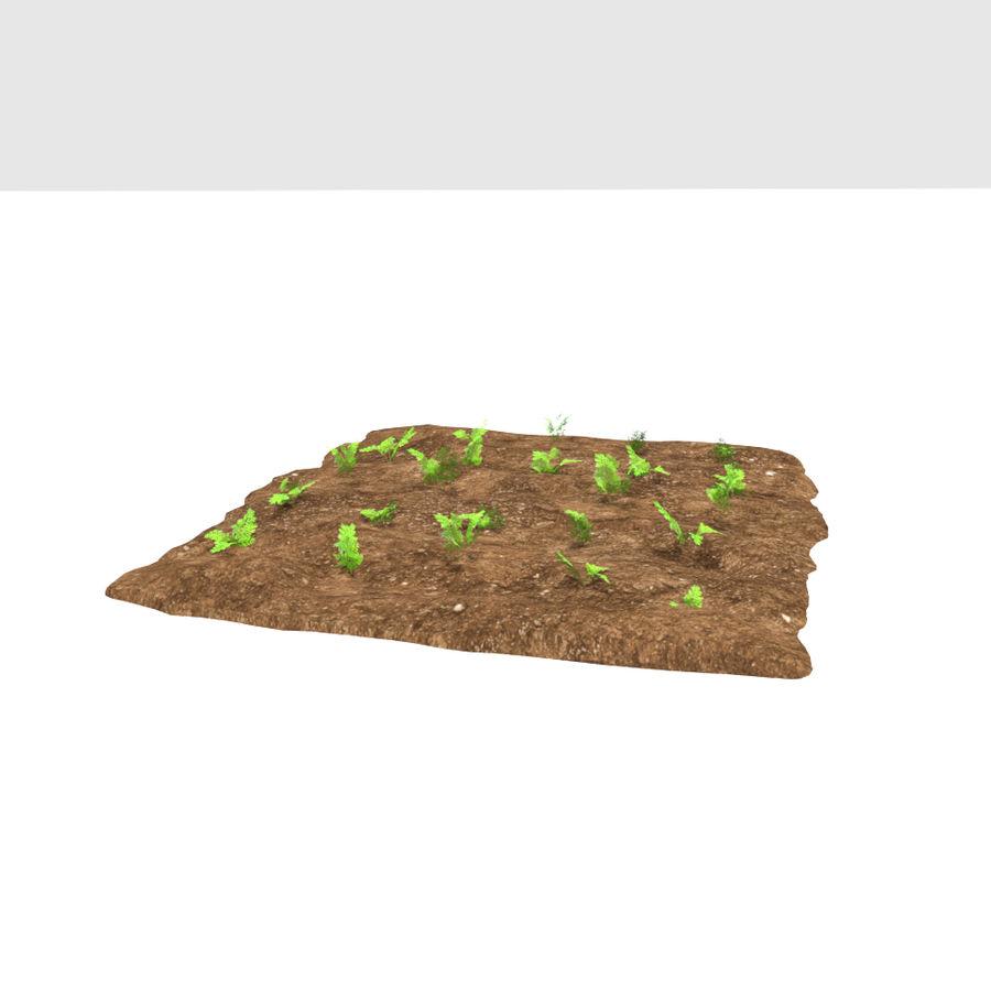 Carotte 3 stades de croissance royalty-free 3d model - Preview no. 7