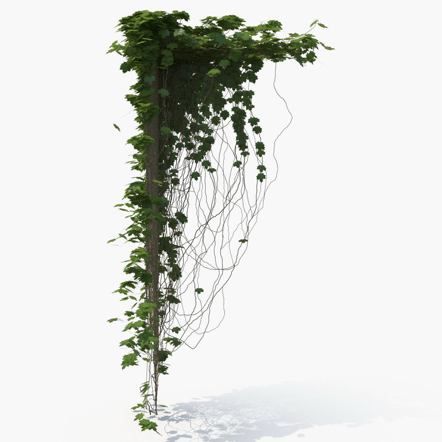 Ivy royalty-free 3d model - Preview no. 3