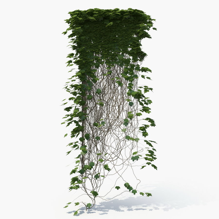 Ivy royalty-free 3d model - Preview no. 6