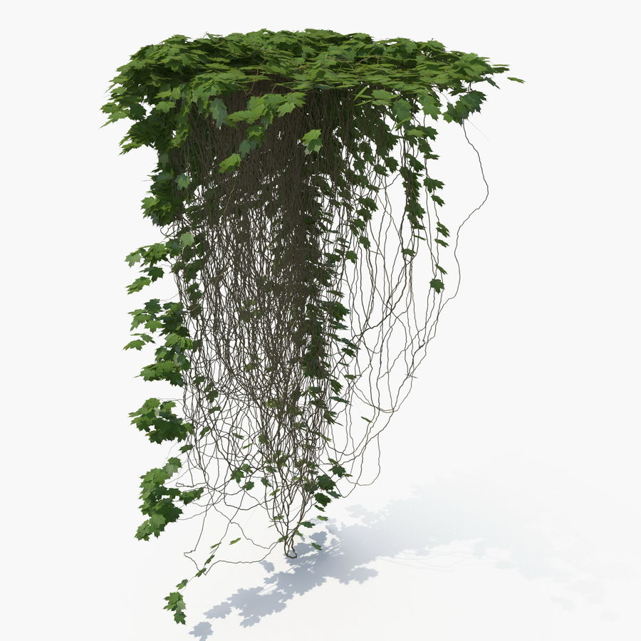 Ivy royalty-free 3d model - Preview no. 2