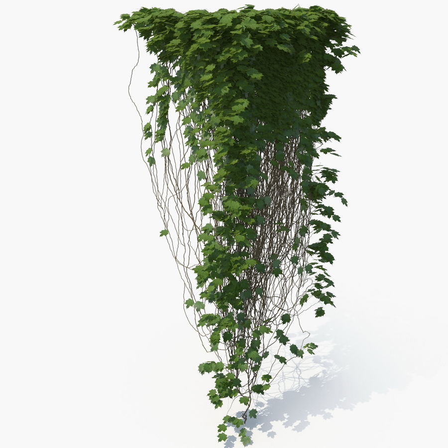 Ivy royalty-free 3d model - Preview no. 1