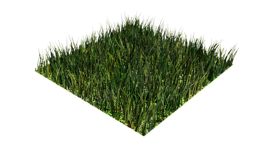 grass multi royalty-free 3d model - Preview no. 6