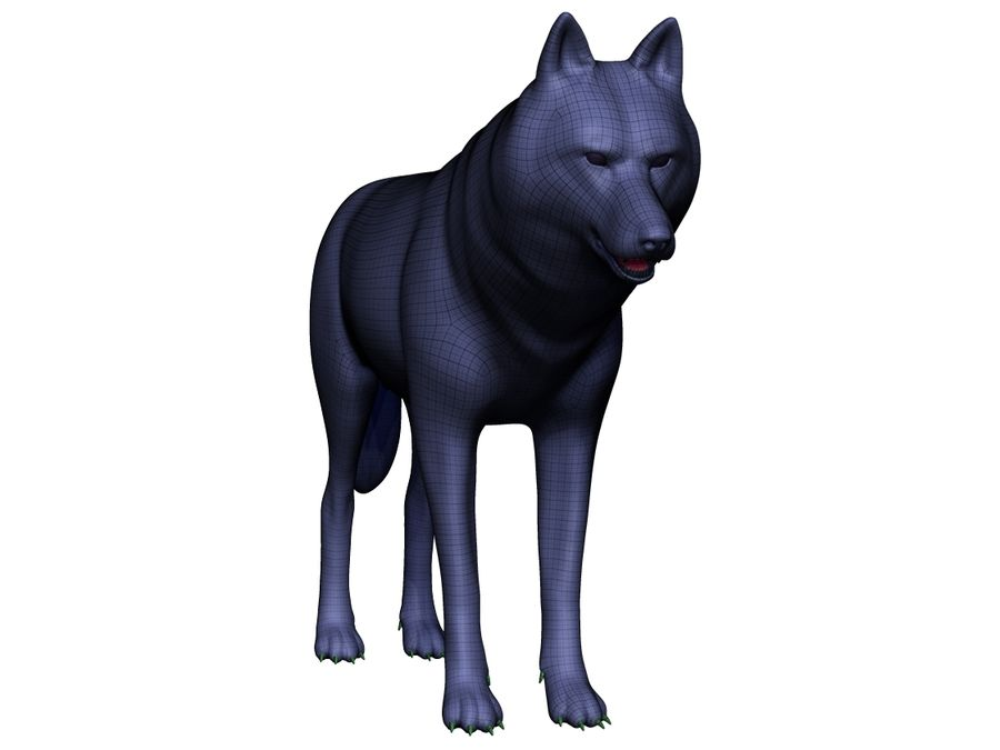 Wolf Base Mesh royalty-free 3d model - Preview no. 11