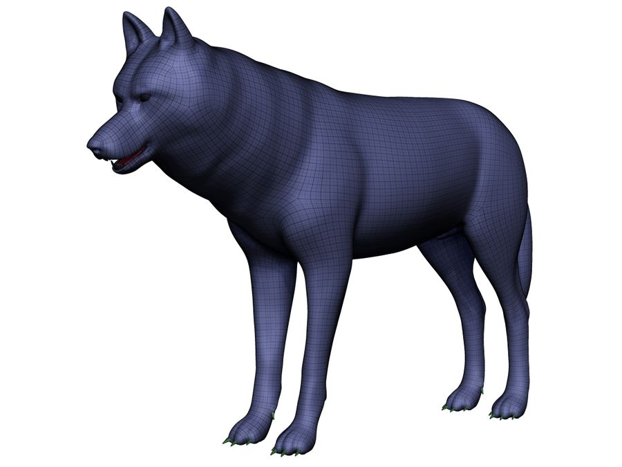 Wolf Base Mesh royalty-free 3d model - Preview no. 8
