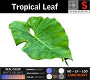 Folha tropical 3d model