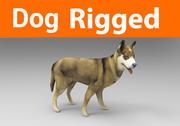 osprzęt psa (1) 3d model