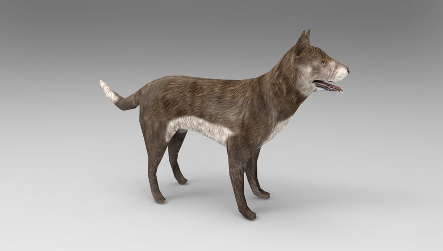 dog rigged(1) royalty-free 3d model - Preview no. 10
