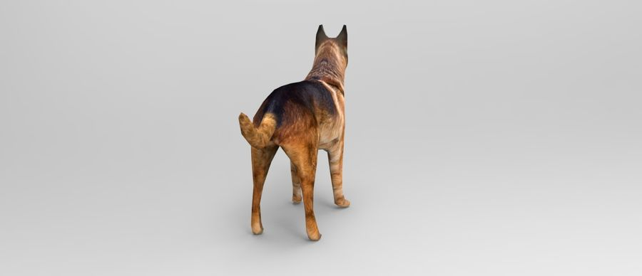 german shepherd dog rigged royalty-free 3d model - Preview no. 10